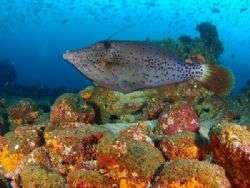 קוסטה ריקה:צלילה באי קוקוס