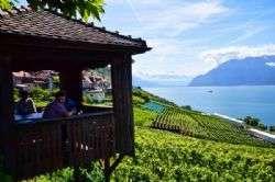 שוויץ: הכרמים של לאבו