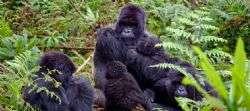 רואנדה Rwanda