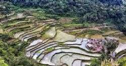 אמנות טרסות האורז באי לוזון