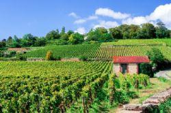 צרפת: יינות וסרטים בבורגון