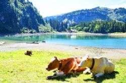 עיירת הנופש והסקי וילאר