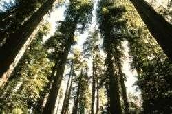 פארק רדווד - העצים הגבוהים