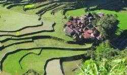 טרסות האורז של בנאווה