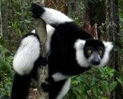מדגסקר - אי הלמורים