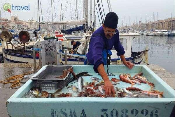שוק הדגים של מרסיי  (צילום: יעל הרמלין)