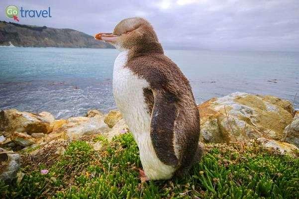 פינגווין מתוק במרחק נגיעה   (צילום: יפה כפיר)