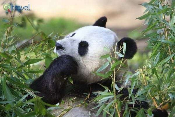 גן החיות של סן דייגו (צילום: fortherock)