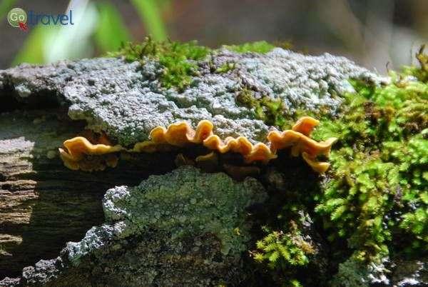 פטריות על גזע עץ ביערות זגוריה   (צילום: כרמית וייס)