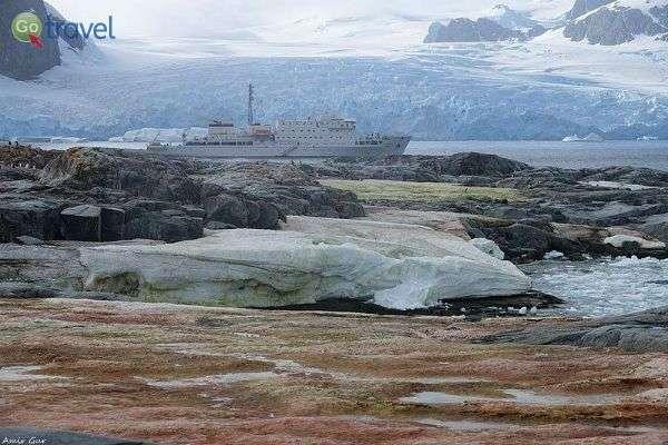 לשלשת של מאות אלפי פינגווינים צובעת את הקרקע (צילום: אמיר גור)