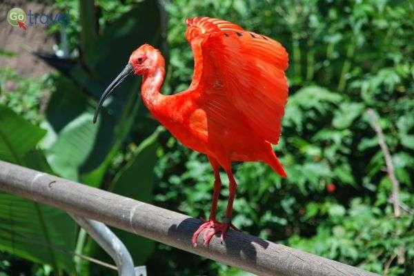 ציפור מגלן שני בדלתת פרנאיבה (צילום: אסף כהן)
