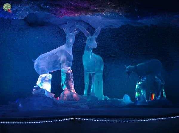 מערת הקרח בקליין מטרהורן  (צילום: Maximilian Cieszynski)