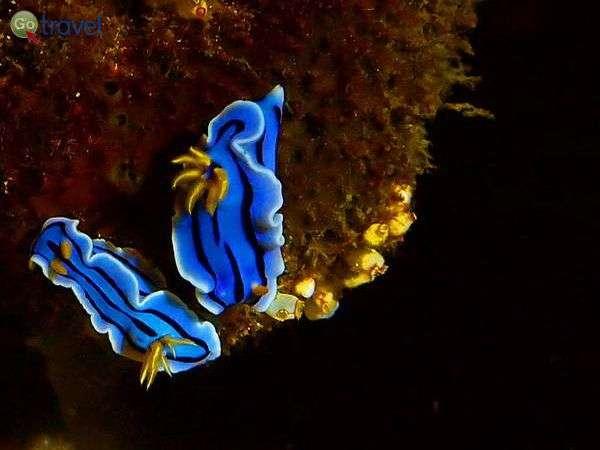 צלילה בפיליפינים (צילום: אמיר גור)