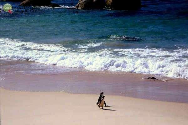 """טיול רומנטי על חוף הים (צילום: ד""""ר רמי דברת)"""