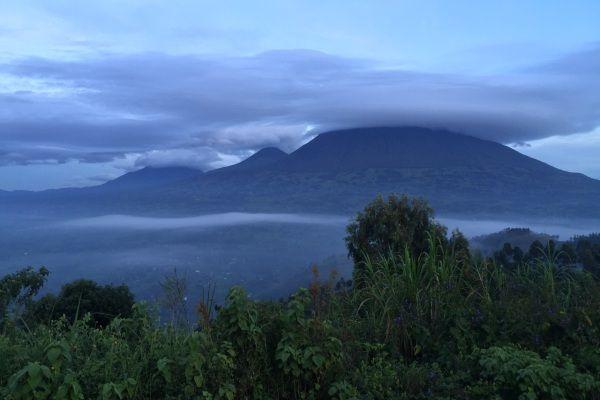 ערפל מכסה את שמורת פארק דה וולקנס ברואנדה (צילום: Jason Tester)