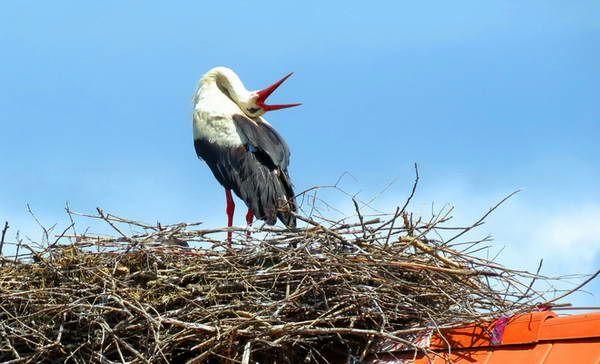 גם החסידות על הגג...   (צילום: כרמית וייס)