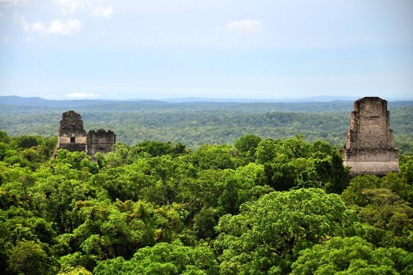 קצות הפירמידות מזדקרות מעל צמרות העצים בעיר המאיה העתיקה טיקאל (צילום: Mario Bollini)
