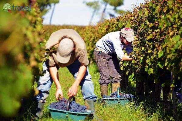אזור היין של בורדו (צילום: Blaye Cotes de Bordeaux)