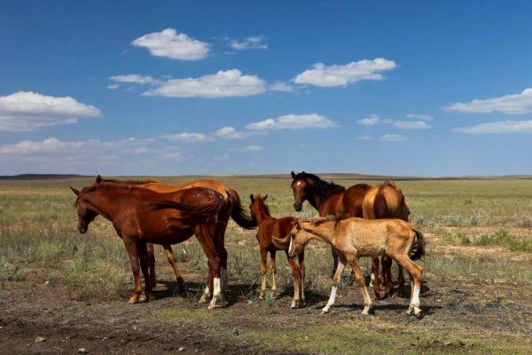 """מקור הקזחים מ""""עמי הסוס"""" (צילום: Ninara)"""