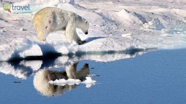 דובה בטיול שלאחר הסעודה  (צילום: מולה יפה)