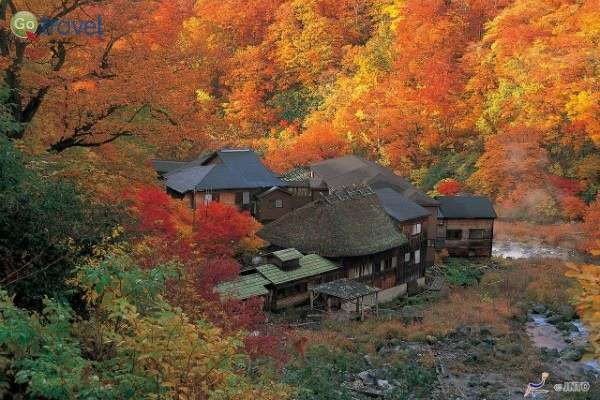 שלכת בהרי האלפים של יפן (צילום: גולן לובנוב)