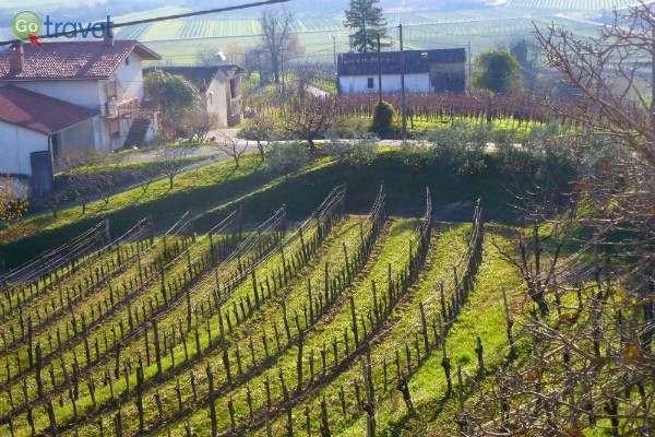 כרמים מלוא האופק, שצורק, סלובניה (צילום: עידו לברן)