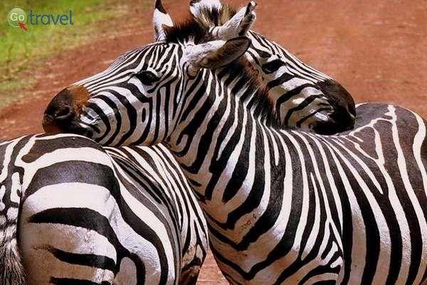 השמורות של טנזניה (צילום: משה שי)