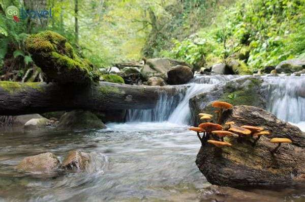 הפארק הלאומי בורג'ומי-חאראגולי(צילום: Pavelmarek100)