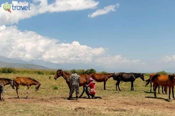 מי אמר שאי אפשר לחלוב סוסה? (צילום:  Ninara)