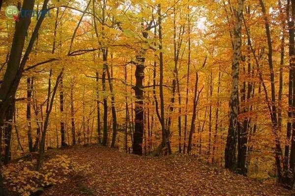 יערות אינסופיים מכסים את סלובקיה (צילום: גלעד תלם)