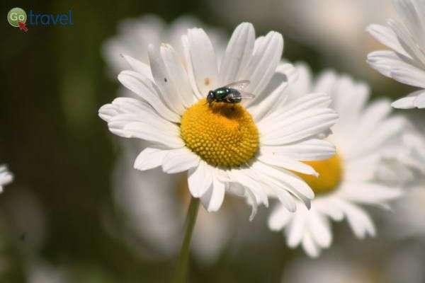 חרק על קחוון  (צילום: גלעד תלם)