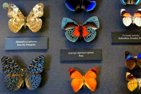 מיני פרפרים שיופיים עולה על כל דמיון, מוזיאון הטבע (צילום: תמירה צדקיהו-חסון)