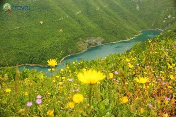 אגם פיווה התכול והפריחה הצהובה (צילום: גלעד תלם)
