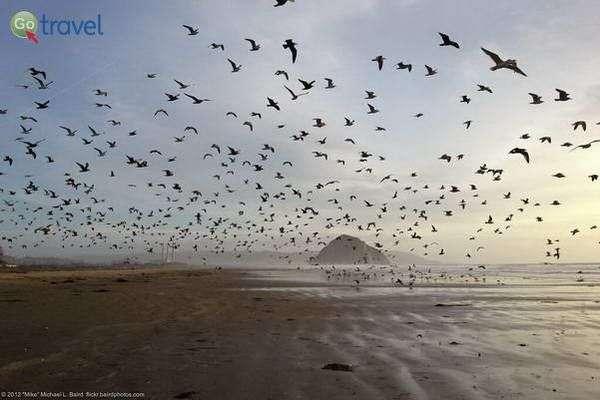 השחפים והסלע במפרץ מורו  (צילום: Mike Baird)