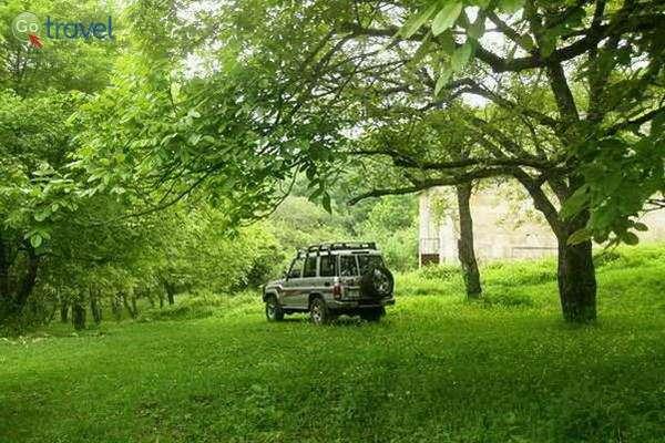 בלב מטע עצי אגוזי מלך, לא רחוק מהכפר נקוב, צפון ארמניה  (צילום: גלעד תלם)