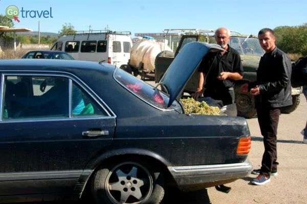 """יש אנשים שמחזיקים מזוודות בתא המטען, אחרים...ענבים! (צילום: ד""""ר רמי דברת)"""
