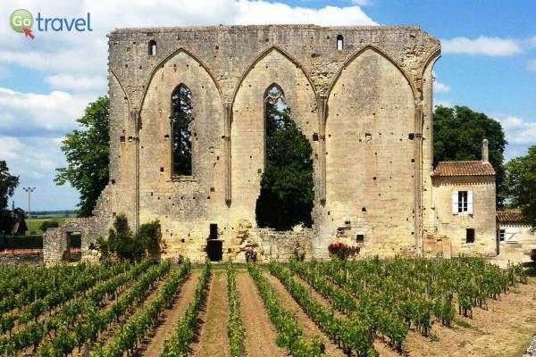 כרמים למרגלות שרידי המנזר (צילום: יעל הרמלין)