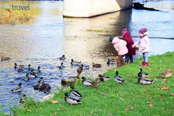 מאכילות ברווזים וברבורים  (צילום: כרמית וייס)