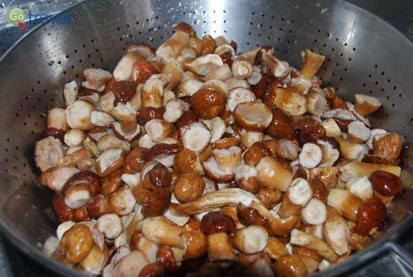פטריות פורציני בגרבנה  (צילום: כרמית וייס)