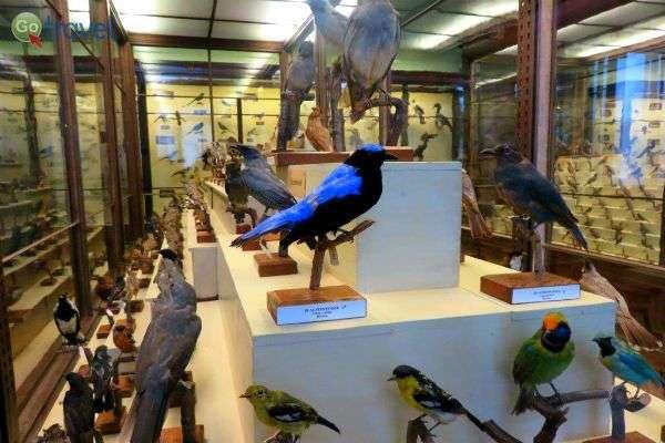 פוחלצי ציפורים במוזיאון הטבע (צילום: תמירה צדקיהו-חסון)