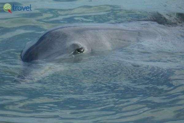 חיוך של דולפין  (צילום: יפעת סלע)