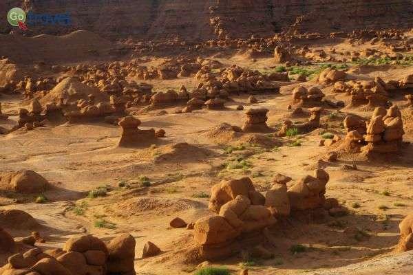 בייבי גובלינים מכסים את פני השטח  (צילום: נטע קלימי-עילם)