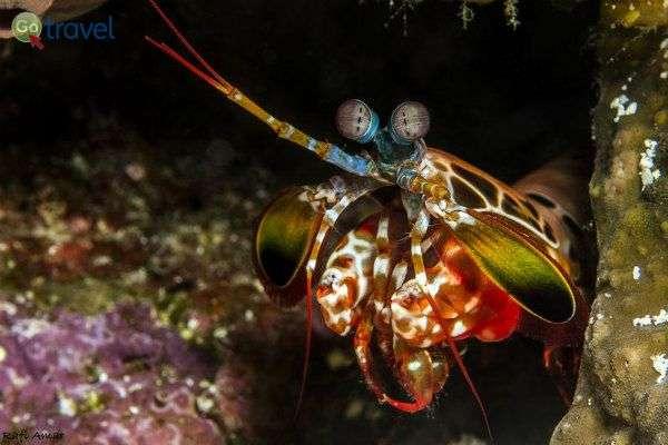 אחד מיצורי האוקיינוס המוזרים מברך אותנו לשלום (צילום: רפי עמר)