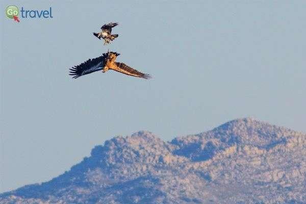 נקודת תצפית מצוינת לעופות דורסים בפעולה (צילום: Archivo)