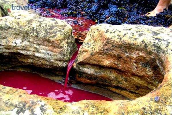 באנדלוסיה יינות משובחים בנוסף (צילום: שירה לבל)