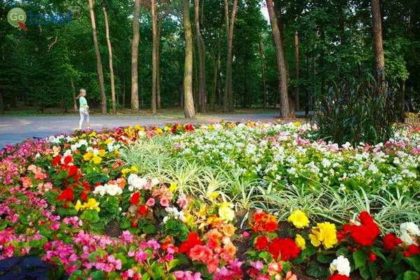 ערוגות הפרחים של צ'חוצ'ינק   (צילום: Visit Ciechocinek)