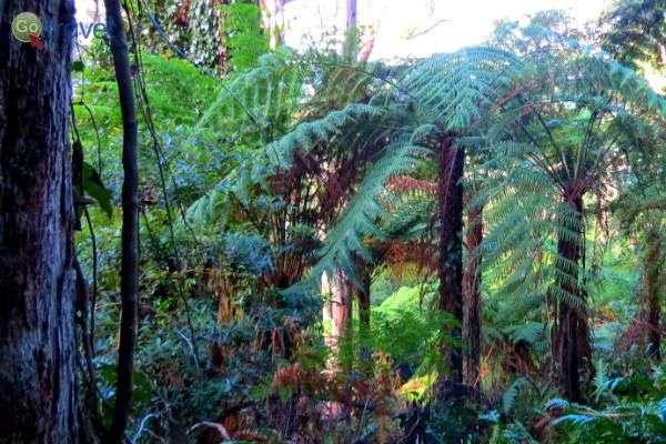 הטיול בין נופי היער, העצים והאבנים  (צילום: פרץ גלעדי)
