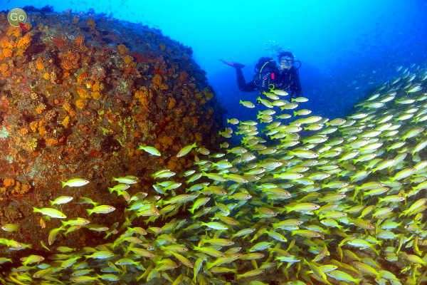 צלילה באיי סיישל (צילום: אמיר גור)