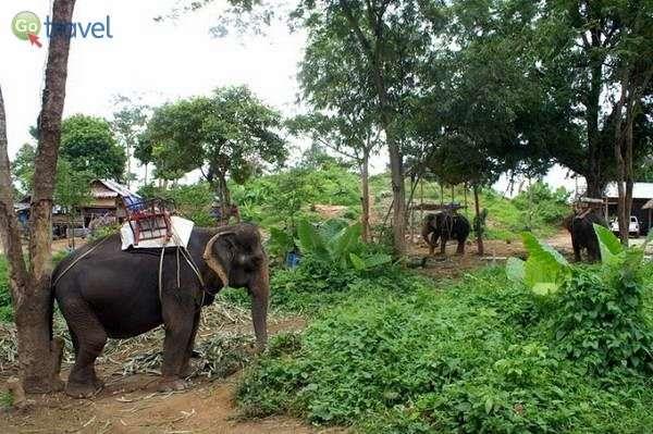 חווית רכיבה על פילים  (צילום: ניסים טורקיה)