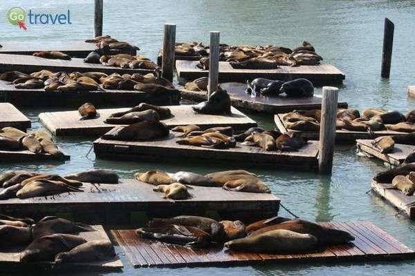 אי אפשר בלי עוד מבט על אריות הים... (צילום: Aussie Assault)